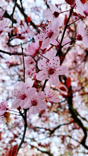 Cherry trees while on patrol