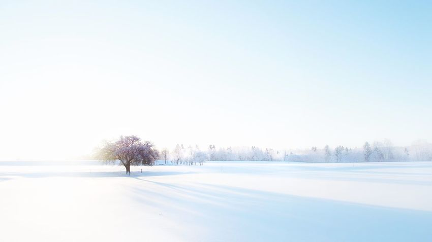 From last winter... Check This Out Hello World EyeEm Best Shots Snowy Trees Wintertime Sweden Winter Wonderland Minimalism Serenity Snow Moody Apple Tree It's Cold Outside