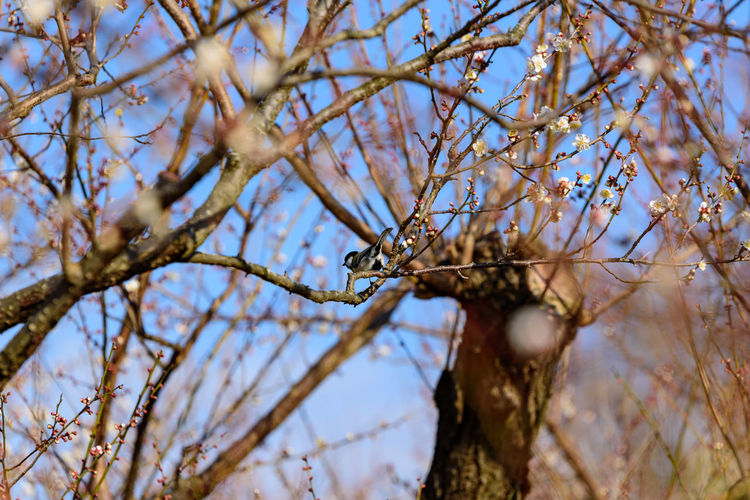 Tree Plant Branch Low Angle View Nature No People Selective Focus Growth Day Beauty In Nature Close-up Tranquility Sky Outdoors Focus On Foreground Bare Tree Twig Flower Animal Wildlife Animals In The Wild 曽我梅林