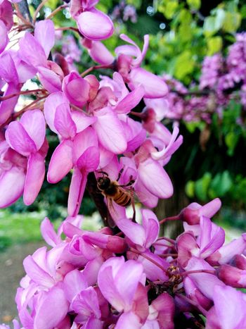 Bee EyeEmNewHere Flower One Animal Petal Pink Color Insect Fragility Animal Themes Animals In The Wild Nature Beauty In Nature Bee Plant Honey Bee Outdoors
