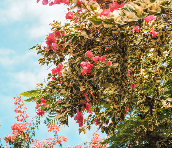 Warm plants Beauty In Nature Branch Cherry Blossom Close-up Day Flower Flower Head Flowering Plant Fragility Freshness Growth Leaf Low Angle View Nature No People Outdoors Pink Color Plant Plant Part Sky Tree Vulnerability