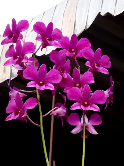 Beauty In Nature Flower Flower Head Growth Nature Orchids Purple Springtime