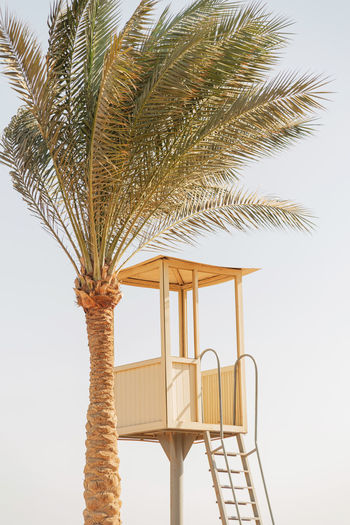 Beautiful tall palm tree and lifeguard tower on the beach by the ocean against the sky