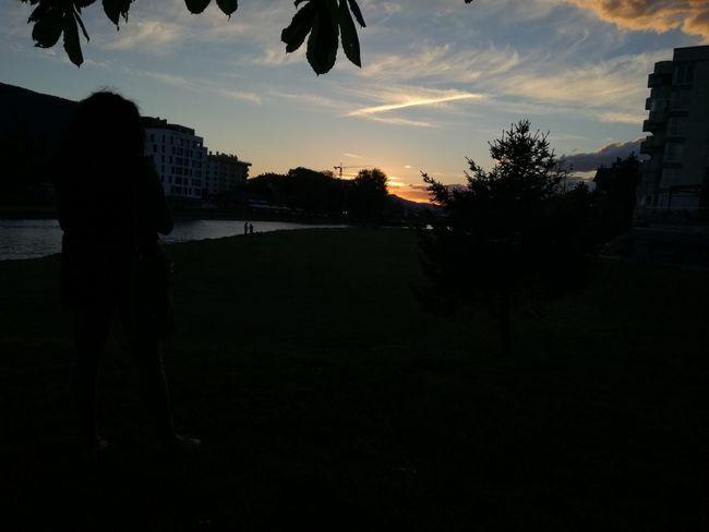 Tree Silhouette Sunset Cloud - Sky Sky Outdoors Nature City