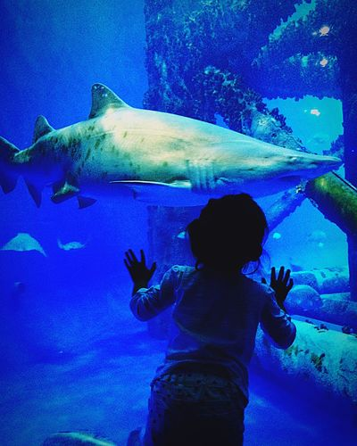 People Of The Oceans Check This Out Sharks Underwater Ocean Photography Aquarium Kids Excited Amazed Deepbluesea Peopleplaces Enjoying Life