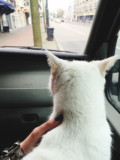 Goodbye City Life Eindhoven Cats Cat In Car