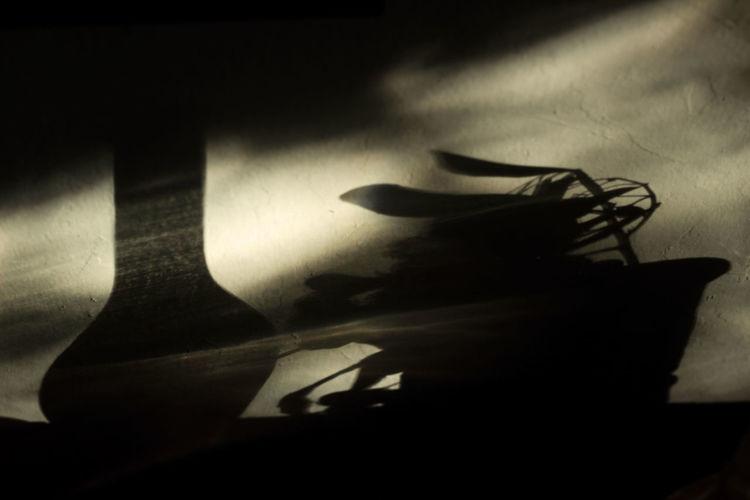 Shadow of a hiding behind curtain