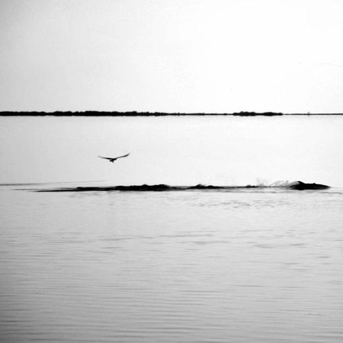 Florida Tarponsprings Beach Dolphin Landscape Black And White Epic P7taylor Epicearthco Creative Light And Shadow