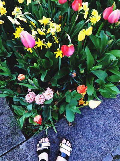 🌷 Flowers 🌹 First Eyeem Photo
