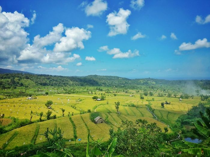 I found rice terraces fields on my way to amed beacg Agriculture Sky Cloud - Sky Green Color Rural Scene Beauty In Nature Scenics Nature Landscape Tranquil Scene Growth Field No People Outdoors Day Tree Bali, Indonesia