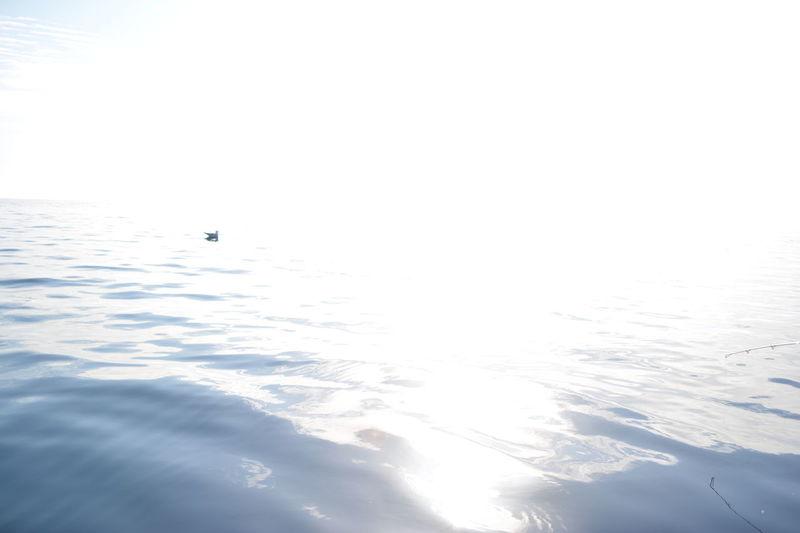 Crazy For Mallorca (Balearic Island) Duck Duck Face Ducks In The Sea Of Balearic Is In The Sea Of M Loving Macklemore Mallorca Adi Mallorca Photographer More Ducks In The Sea