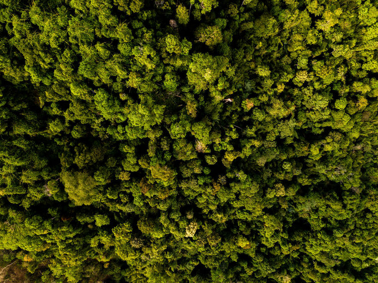 DJI X Eyeem Drone  Backgrounds Beauty In Nature Close-up Day Dronephotography Freshness Full Frame Green Color Growth Nature No People Outdoors Plant Skypixel Textured