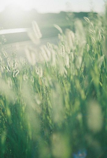 grass waving in the wind Nature Grass Beauty In Nature Day Nature Green Color Green Japan