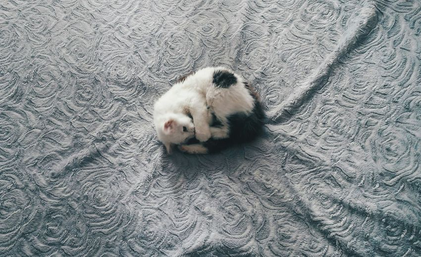 My new model ❤ Check This Out Cute Pets Catoftheday Cat♡ I Love My Cat OpenEdit