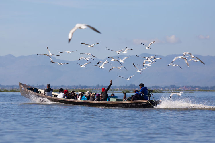 Birds flying over boats in water against sky