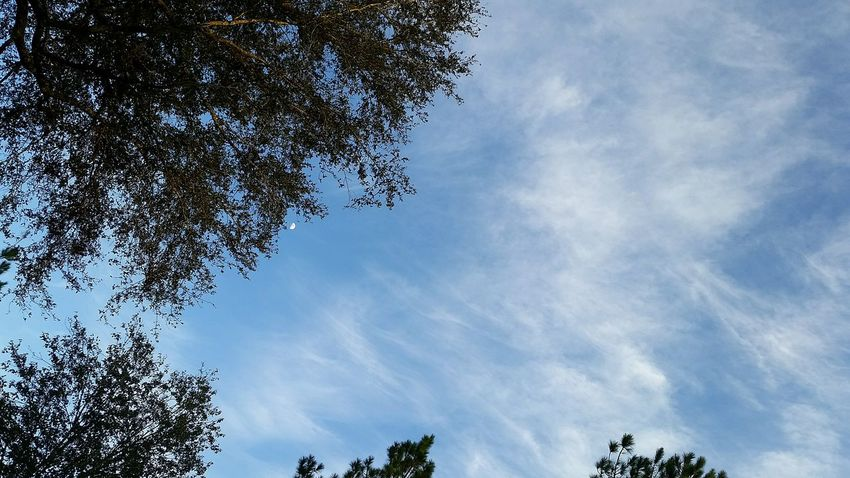 Florida Skies Taking Photos Trees Skyporn Florida Sky Moon Phoneography November2015 Samsung Galaxy S5 Outdoor Photography Hobbyphotography Admiring Nature's Beauty Hello World From Where I Stand Nature Clouds Beautiful Nature