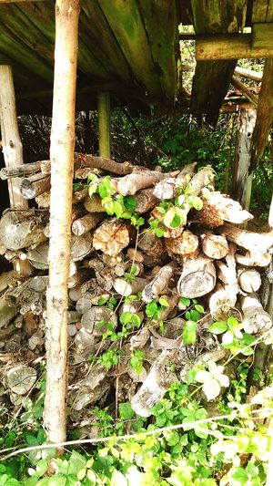Holzhaufen  Holz äste Oberkrumbach Nature