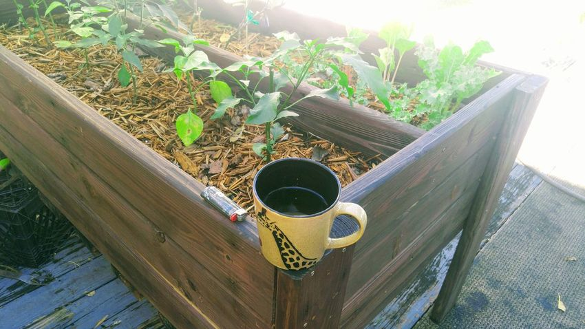 Morning tea Plant Day No People Outdoors Morning Tea Morning Glow Morning Light Morning Coffee Gardening Tea Cup Coffee Cup Tea Time ❤