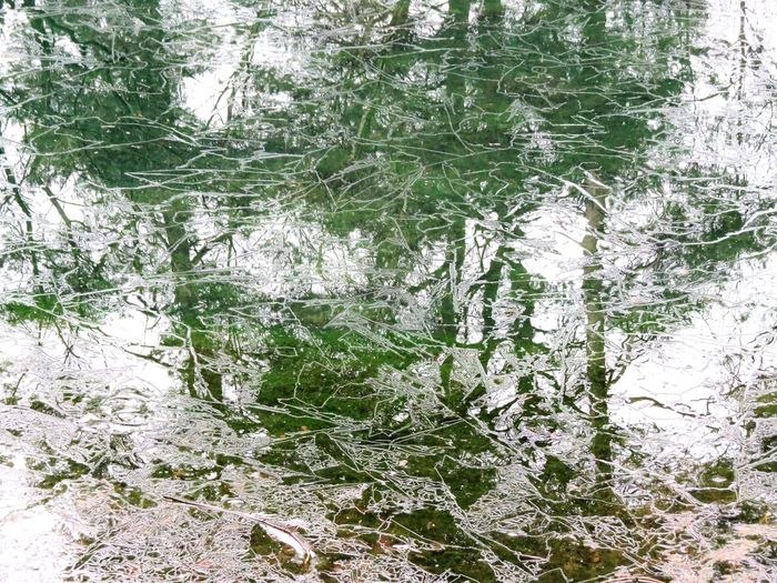 Backgrounds Nature Green Color Full Frame Outdoors Cold Temperature Ice Water Water Reflections Ice Reflections Thenetherlands Driebergenrijssenburg Driebergen Bornia Forest Tranquil Scene Perspectives On Nature