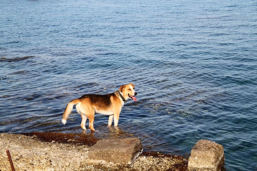 Animal Themes Dog Domestic Animals Mammal Nature No People One Animal Outdoors Pets Rhodes Ródos Sea Seashore Shore Summer Water