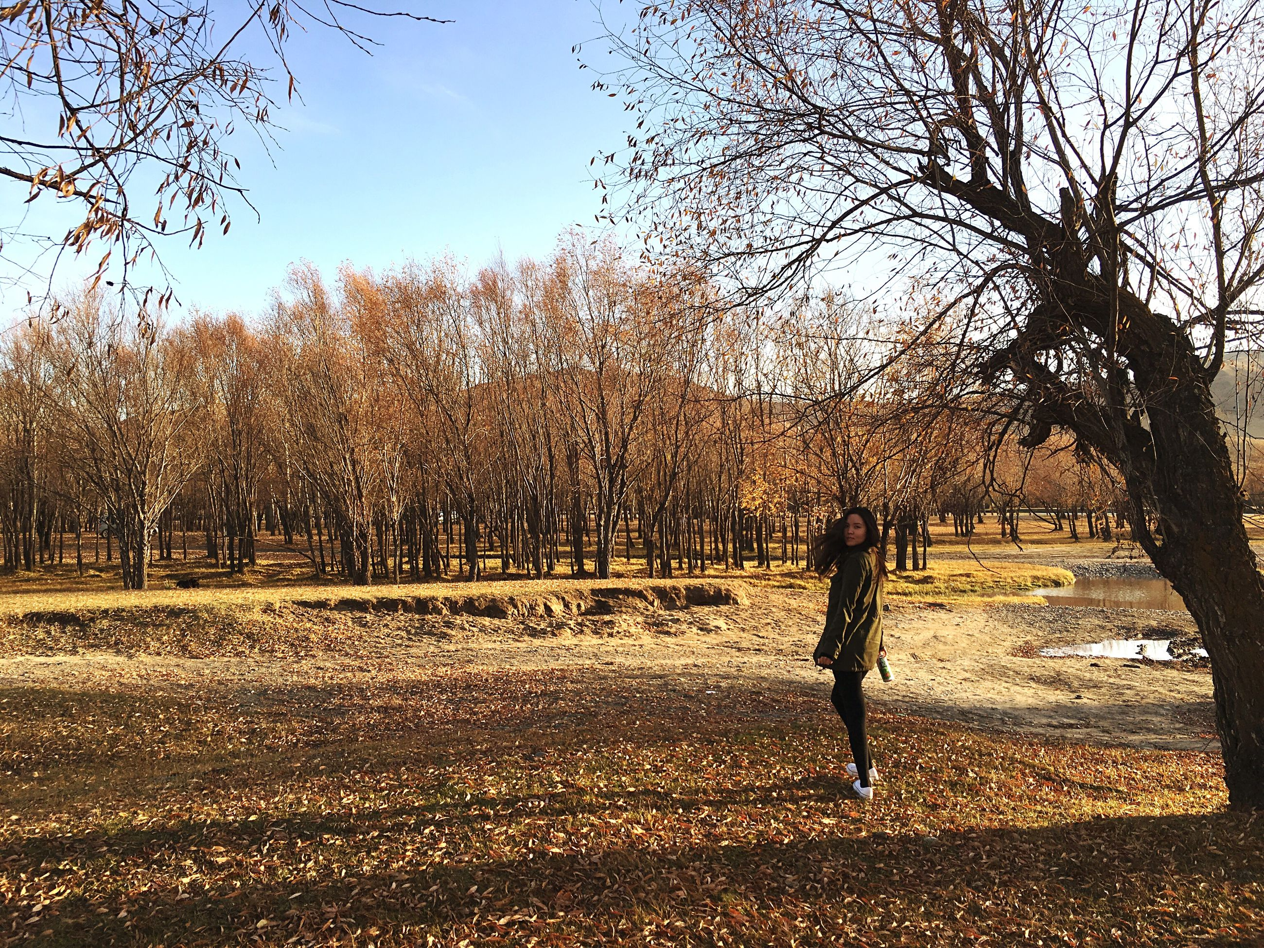 tree, bare tree, walking, autumn, shadow, change, park - man made space, tranquil scene, branch, park, tranquility, tree trunk, nature, scenics, day, beauty in nature, growth, fallen, outdoors, abundance, sky, remote, leaves, treelined