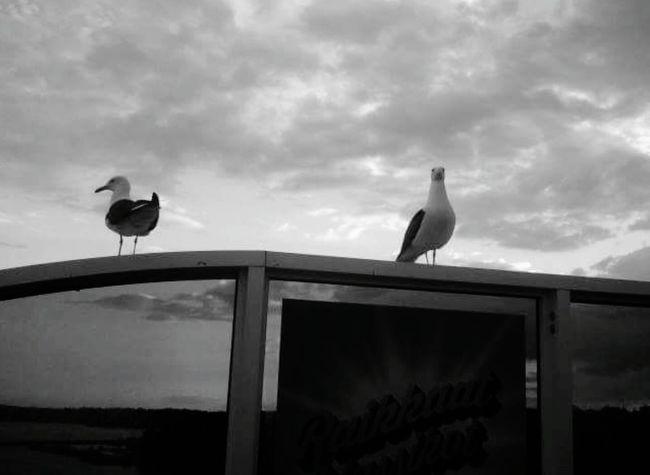 On the top of the door.. Bird Bnw_friday_eyeemchallenge Bnw_doors
