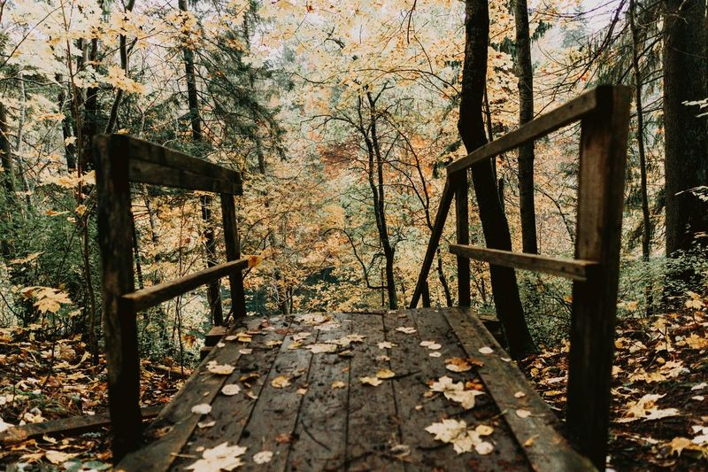 Autumn Nature Day Architecture Metal No People Built Structure Leaf Tree Outdoors Barrier Protection Railing A New Beginning Autumn Mood