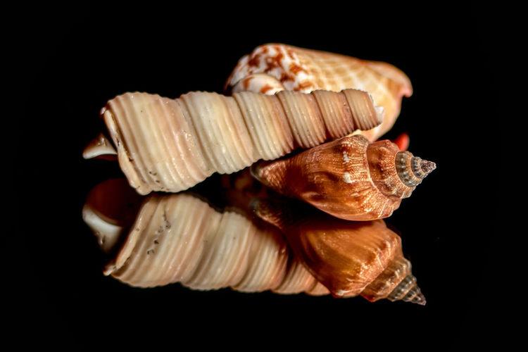 Shells Black