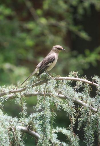 Animal Themes Animal Wildlife Animals In The Wild Vertebrate Animal One Animal Bird Side View Beauty In Nature Branch Green Color Outdoors Perching Plant No People Nature Day Focus On Foreground Close-up Tree