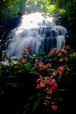 Mun dang waterfall 5th floor15 Waterfall Water Nature Beauty Flower Scenics Landscape Beauty In Nature Social Issues Freshness No People Plant Travel Destinations Tree Outdoors Day Sky Snapdragon Wild Flowers The Week On EyeEm EyeEmNewHere Forest Nature Reserve Pink Color Beauty In Nature