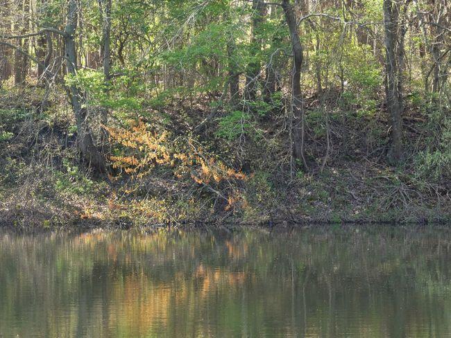 Panasonic Lumix DMC-FZ80 Tree Plant Water Reflection Growth Lake Beauty In Nature