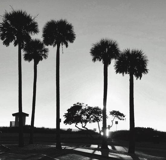 Silhouette palm trees against sky