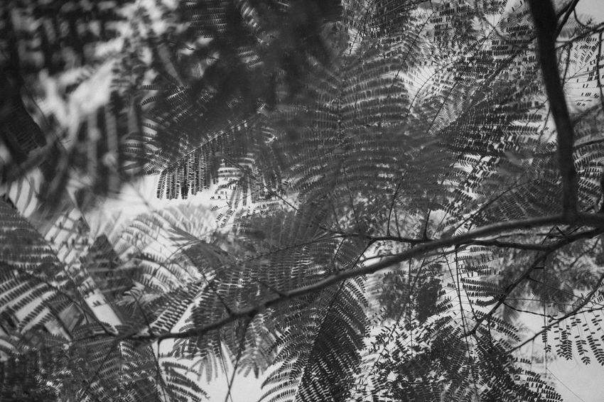 EyeEm EyeEm Best Shots EyeEm Nature Lover EyeEm Selects EyeEm Gallery From My Point Of View The Week On EyeEm X-PRO2 Black And White Blackandwhite Branch Close-up Enjoying Life Fujifilm Fujifilm_xseries Growth Lifestyles Light And Shadow Monochrome Nature Plant Tree