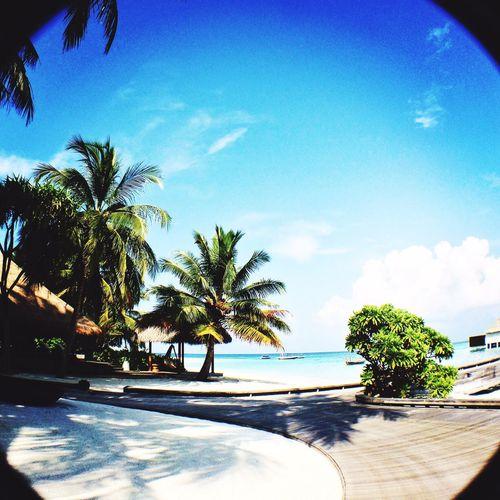 Maldives Sunshine White Beach Blue Ocean Indian Ocean