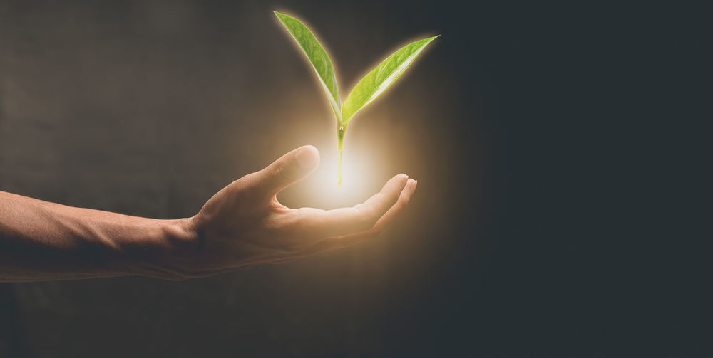 Midsection of person holding illuminated plant against gray background