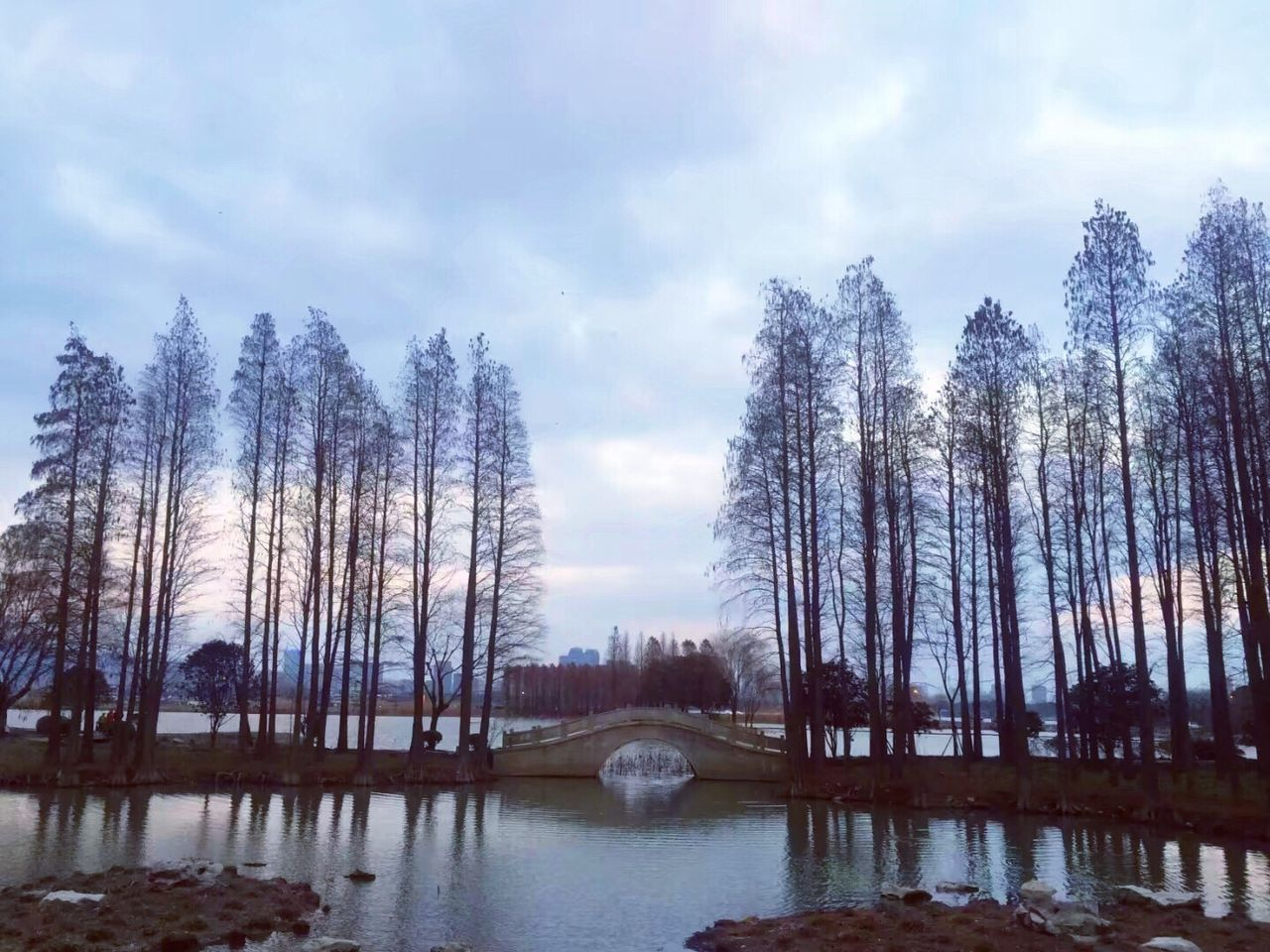 PANORAMIC VIEW OF LAKE WITH TREES IN BACKGROUND