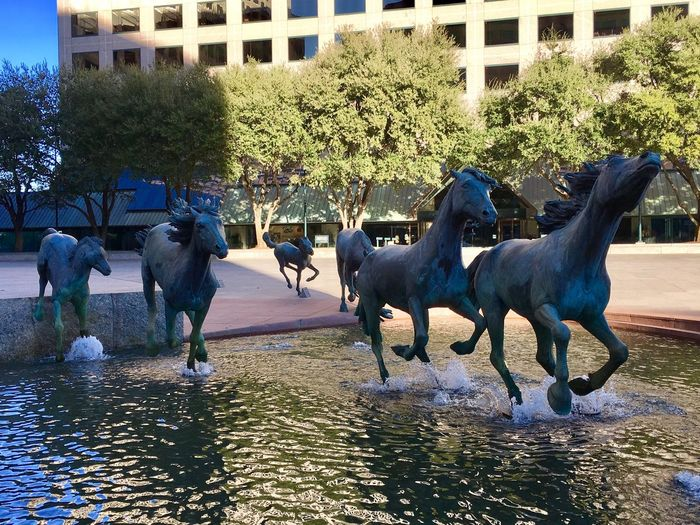 Water Tree Domestic Animals Mammal Horse Horses Livestock No People Outdoors Nature Day Mustangs Stallion Mare Sculpture Bronze Bronze Statue Irving Mustangs Texas Las Colinas