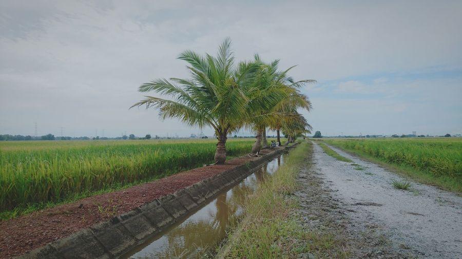 Coconut threes