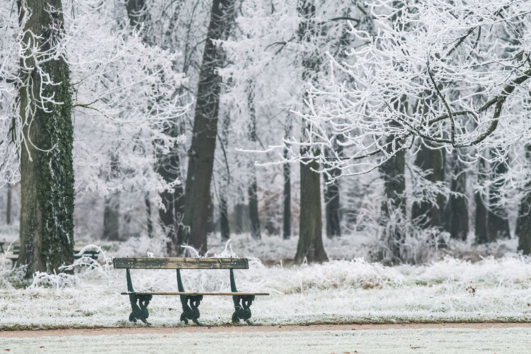 Bench in park during winter