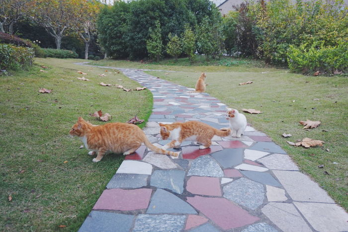 A good day to play outdoors. The cat family get together and play in the grass land in line. Lovely animal family with many loves. Sony α5000 Day Domestic Animals Grass Growth Love Mammal Maternal Love Mother Nature Nature No People Outdoors Pets