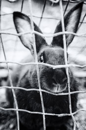 Blackandwhite Animal Themes Mammal One Animal Domestic Animals Pets Close-up Cage