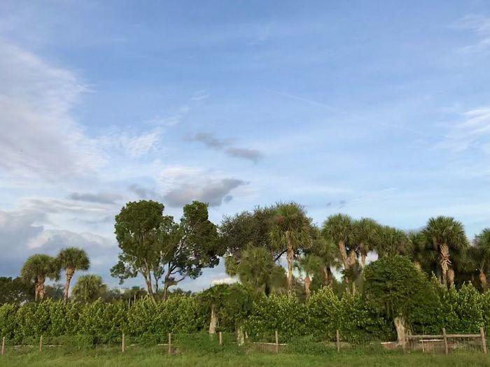 Miami ✨ Tree