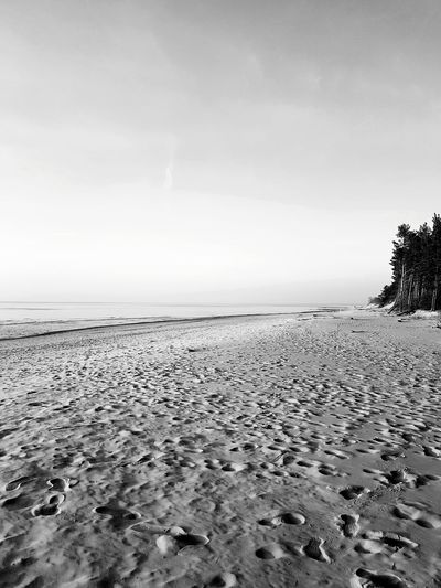 Black And White Tree Pine Tree Rampage  The San Sunset Sanset Water Sea Beach Sand Summer Sky Horizon Over Water Landscape