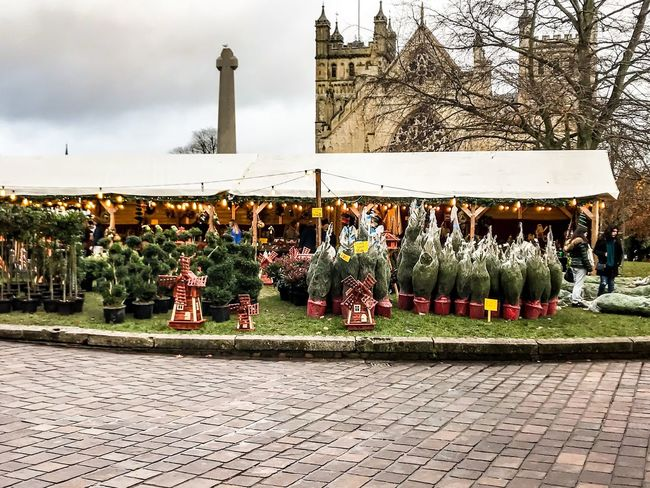 Christmas trees outside the cathedral Christmas Preparations Christmas Decoration Architecture Built Structure Day Building Exterior Outdoors Bare Tree City Grass Items For Sale Christmas Market