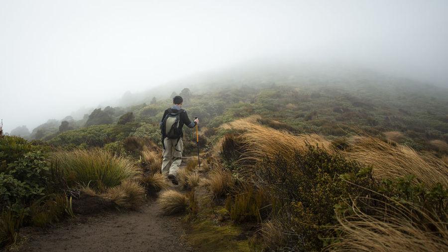 Rear view of man walking on trail on field