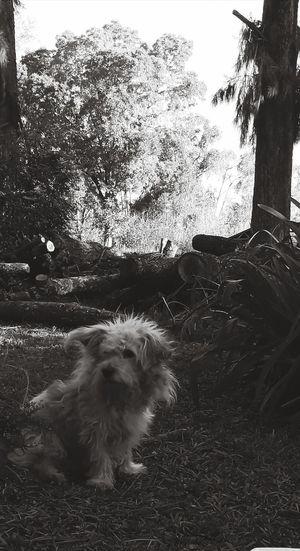 Tree Pets Dog Sky