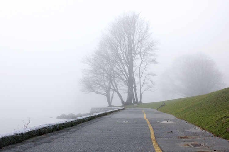 The Way Forward Direction Fog Tree Plant Bare Tree Tranquility Nature Tranquil Scene Beauty In Nature Scenics - Nature Outdoors