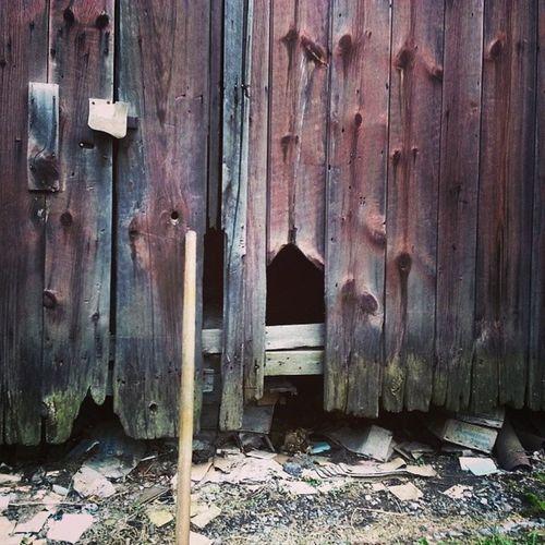 Barn wall Dryrot Ruraldecay Fungus Rake boards knotted broken debris faded paint barn Americangothic detail