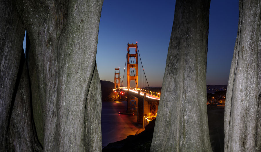 The Golden Gate Bridge framed by Cypress Trees on a summer clear night sky. California Coastal Trail, The Presidio, San Francisco, California, USA. Sky Nature Built Structure Architecture No People Bridge Bridge - Man Made Structure Connection Dusk Illuminated Transportation Wood - Material Tree Water Outdoors Blue Trunk Tree Trunk Motion Architectural Column Golden Gate Bridge San Francisco Monterey Cypress Cypress Trees  Cityscape City Structure Suspension Bridge Reflection Bay California Sightseeing Tourism Travel Summer Night Ocean Sea Attractions Destinations Tourist Scenics Scenery Landscape Icon Famous Presidio Horizon Lights Traffic