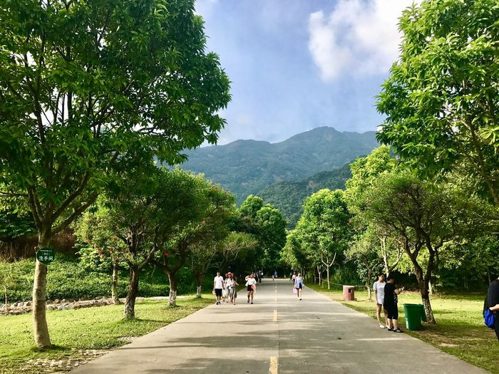 Tree Nature Mountain Beauty In Nature Green Color Day Growth Walking Sky Tranquility Real People Scenics Vacations Men Women Outdoors Travel Destinations Landscape Mountain Range Grass